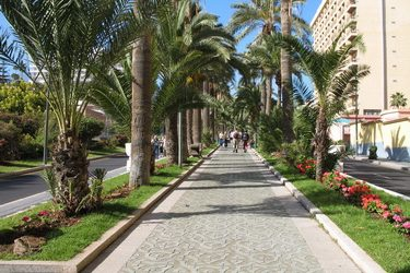 Paseo de las Palmeras [the Palm Tree Promenade]